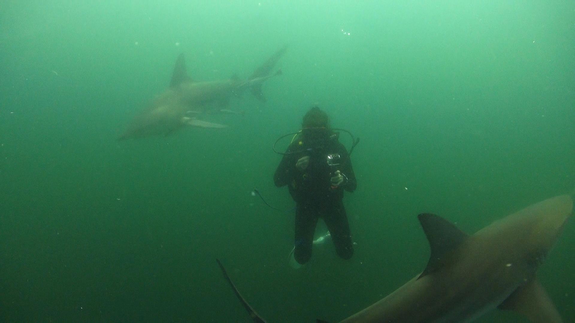 Погруженя с акулами