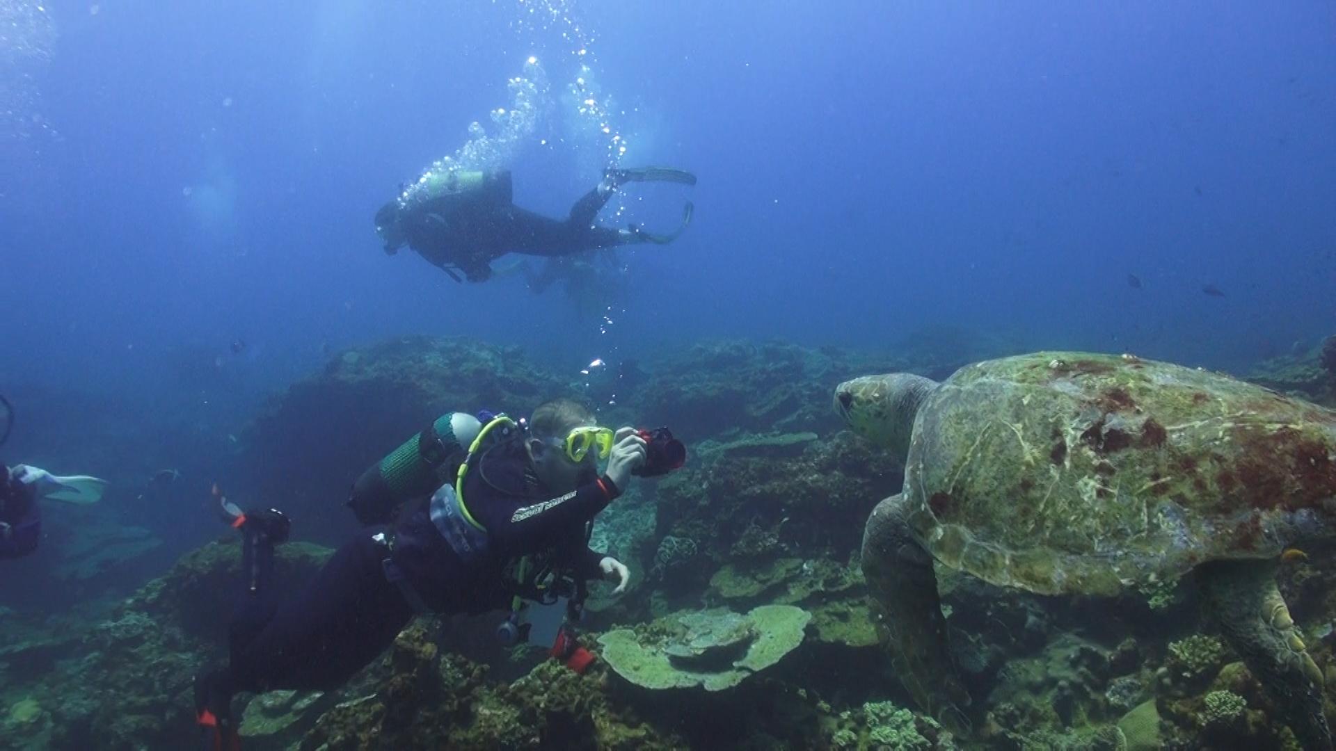 Żółwie na rafie
