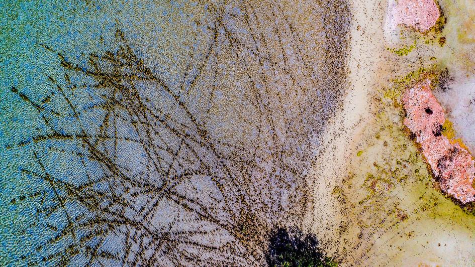 Mangrove Ripple Pool
