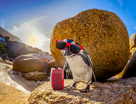 curious african penguin with funny sungl
