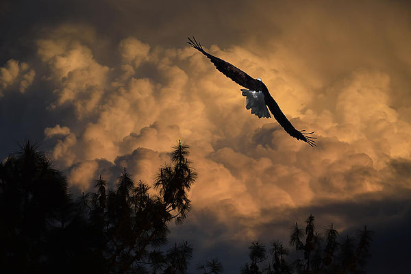 eagle-flying-into-the-storm-frank-wilson