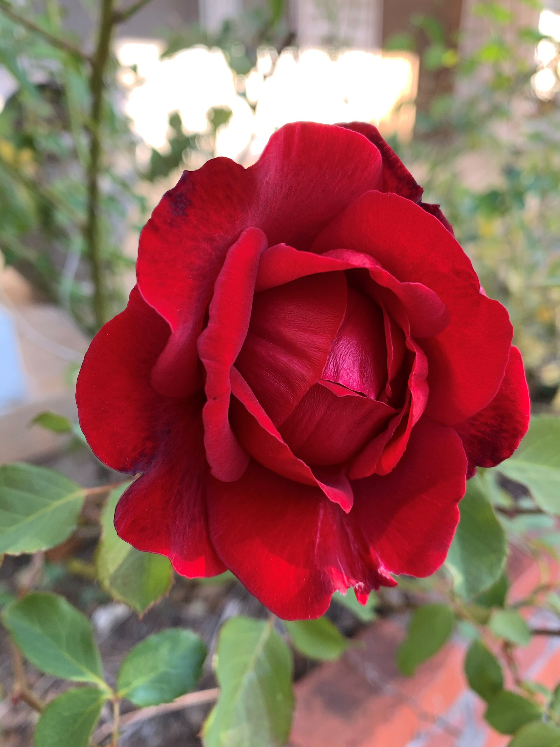 A rose by any other name ...