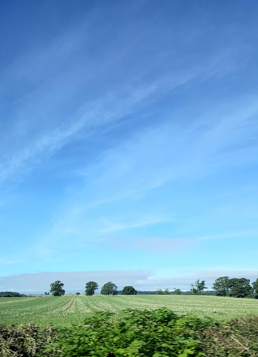 Vast Blue skies  green planted fields  cultivated fields Summer sky  Carefree Day