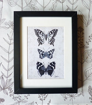 Monochrome butterflies wall art Black and white butterfly Illustration Wall art of butterflies