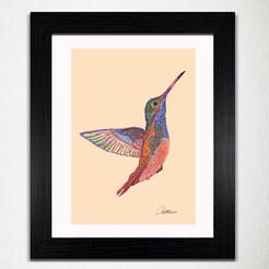 Hummingbird - Colours of Nature Print