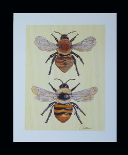 Print - Carder Bee Duo