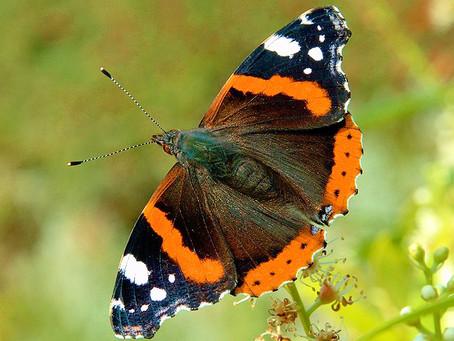 The Butterfly - In Art