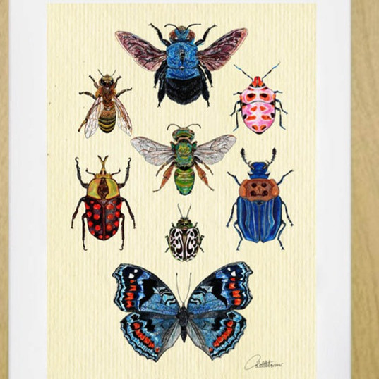 Entomology II - A special collection
