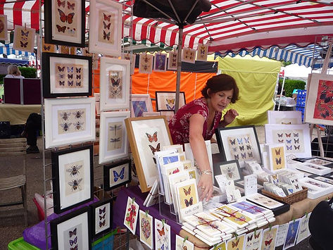 Canvasbutterfly stall Bristol Festival Of Nature 2014