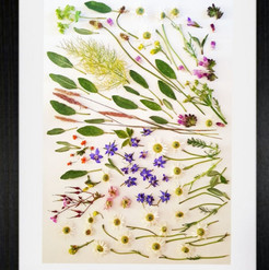 Botanical - Allotment pickings