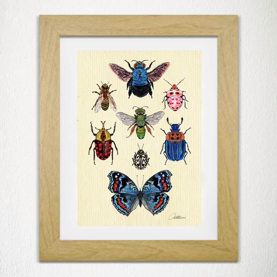 Entomology II - Special Collection