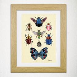 Entomology II - Special Collection