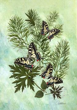 Swallowtails trio_Watermarked edited-2