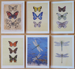 Greeting Cards pack