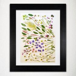 'Botanical' - Wall Art Prt
