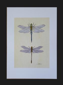 Dragonflies on Canvas.Canvas XXXXV.jpg