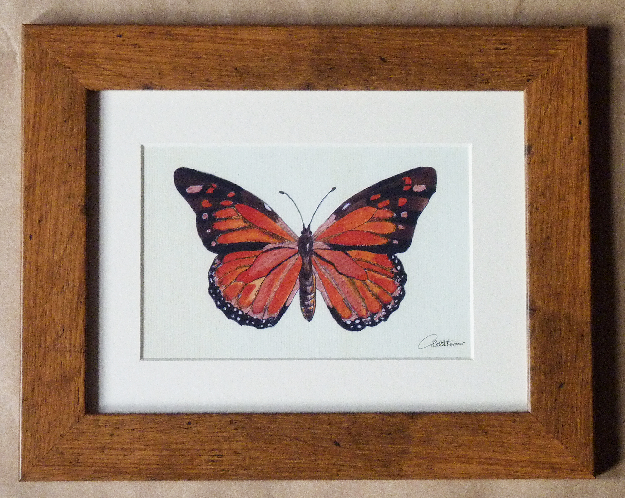 Monarch on Canvas