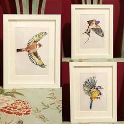 Bird Prints - Late Summer 2019