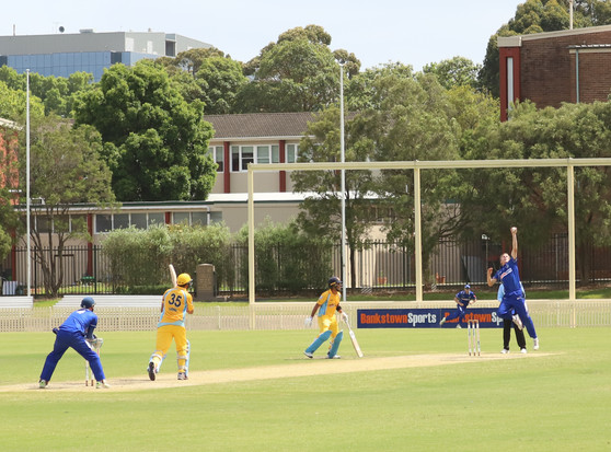 Bees just sting the Dogs, but Dogs bark in T20s