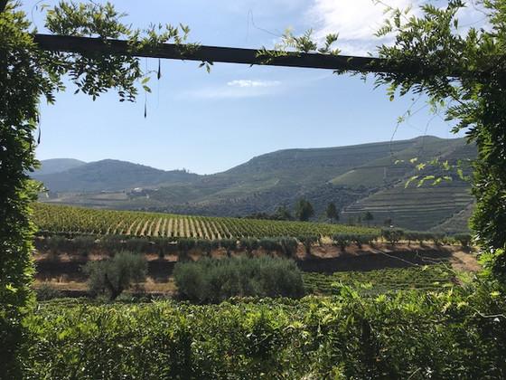 Douro Valley and Happy Birthday