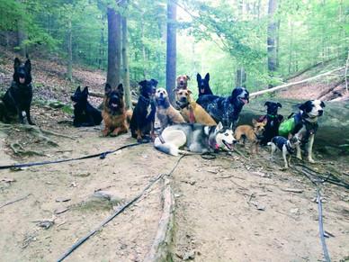 Pack Hike!