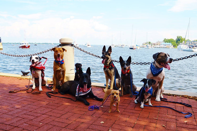 group annapolis dog pack walk