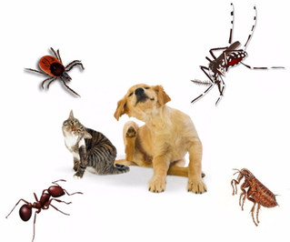 Protect Pets from Pests