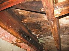 crawlspace rot moisture and fungi