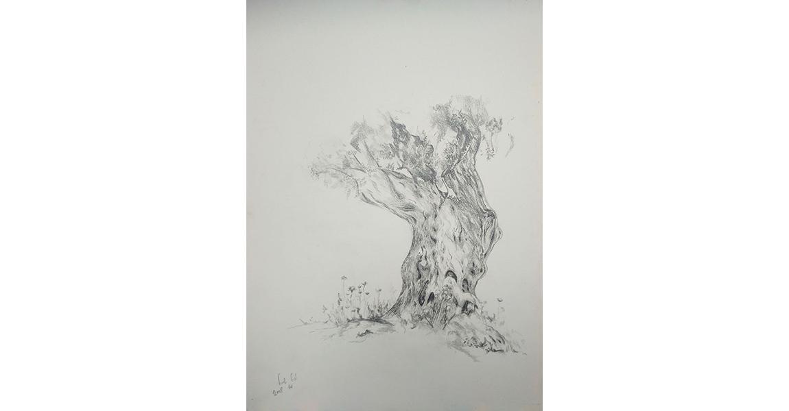 גזע עץ זית, 2008