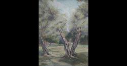 עץ זית -1, 2005