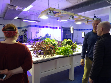 Urban fish, free school meals and fighting food waste: learning from Gothenburg's food system