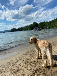 newfound-lake-inn-dog.jpeg