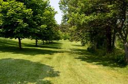 Maple Field
