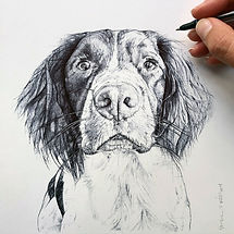 Pet portrait by Elise Wortley, Birobugs, Cocker Spaniel