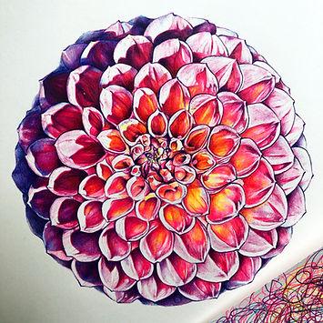 Birobugs, Elise Wortley, flower art, dahlia drawing