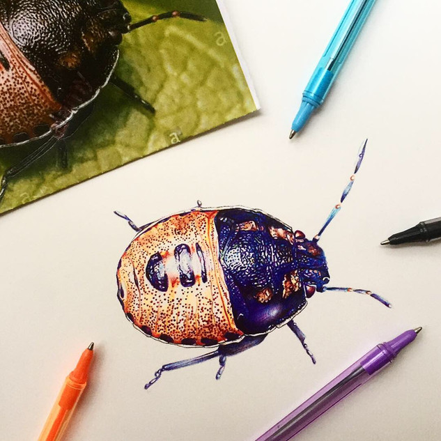 Shield Bug, Biro Bugs
