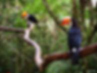 Parque-das-Aves-Foz-do-Iguacu-4.jpg