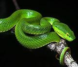 Fear green snake thumbnail.jpg