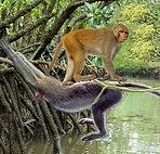 Monkey bridge main pic crop.jpg