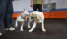 puppy socials milpitas