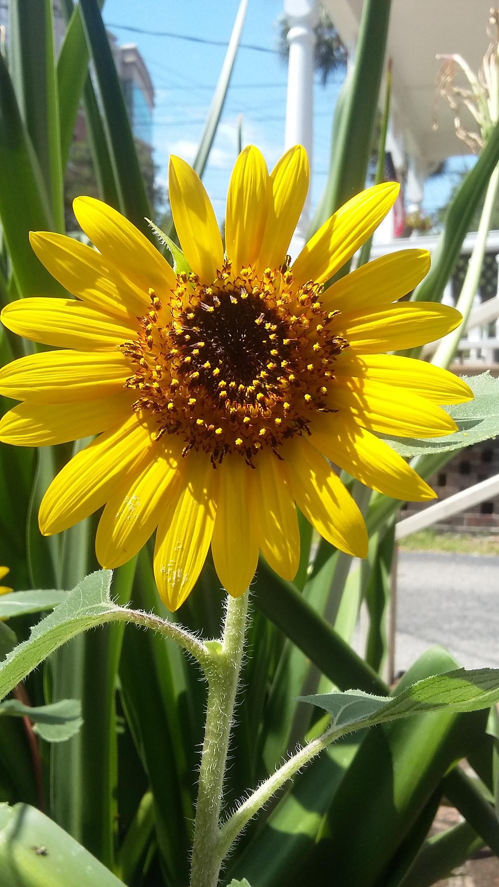 Love My Sunny flowers !!!