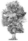 Annie Ovenden - Tree At Blenhiem