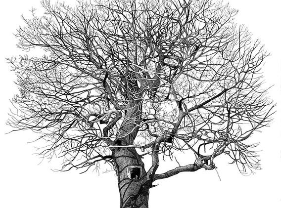 Annie Ovenden - Tree in Tredegar Country