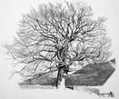 Annie Ovenden - Tree at Lanhargy