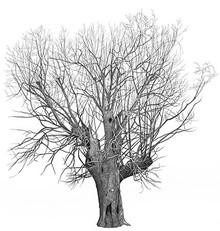 Annie Ovenden - Tree on Hampstead Heath
