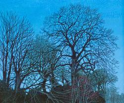 Annie Ovenden - Evening Light