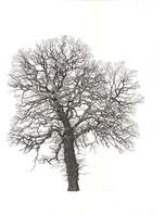 Annie Ovenden - Lostwithiel Tree 5