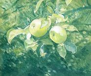 Annie Ovenden - Apples