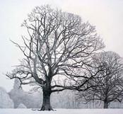 Annie Ovenden - December Tree