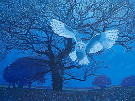 Annie Ovenden - Barn Owl At Kirland
